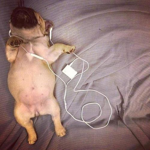 cachorro musica